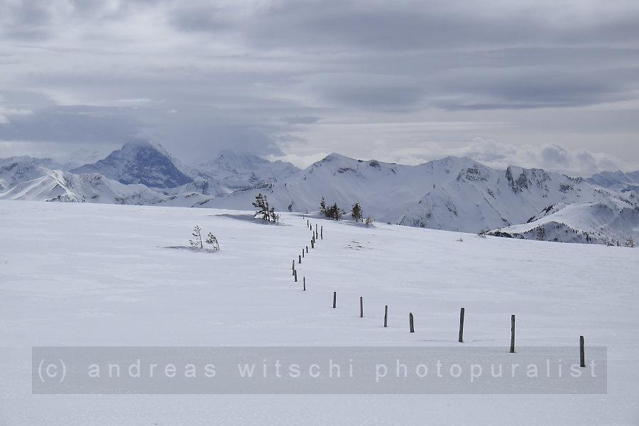 blick in die berner alpen von der trogenegg